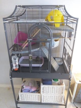 Nouvelles rates, nouvelle cage !  Img_2011