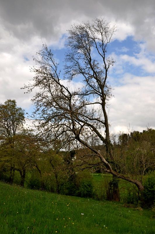 Un arbre Arbre_10
