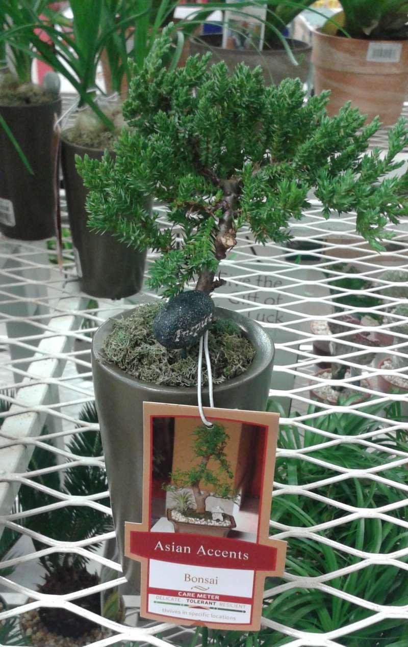 Bonsai Tree Soil Lowes Bonsai Tree