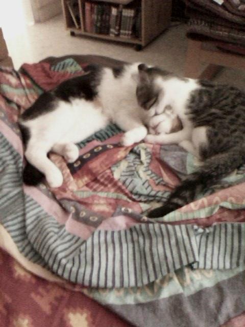 June, chatonne tigrée blanche née le 11/04/2014 Img00111