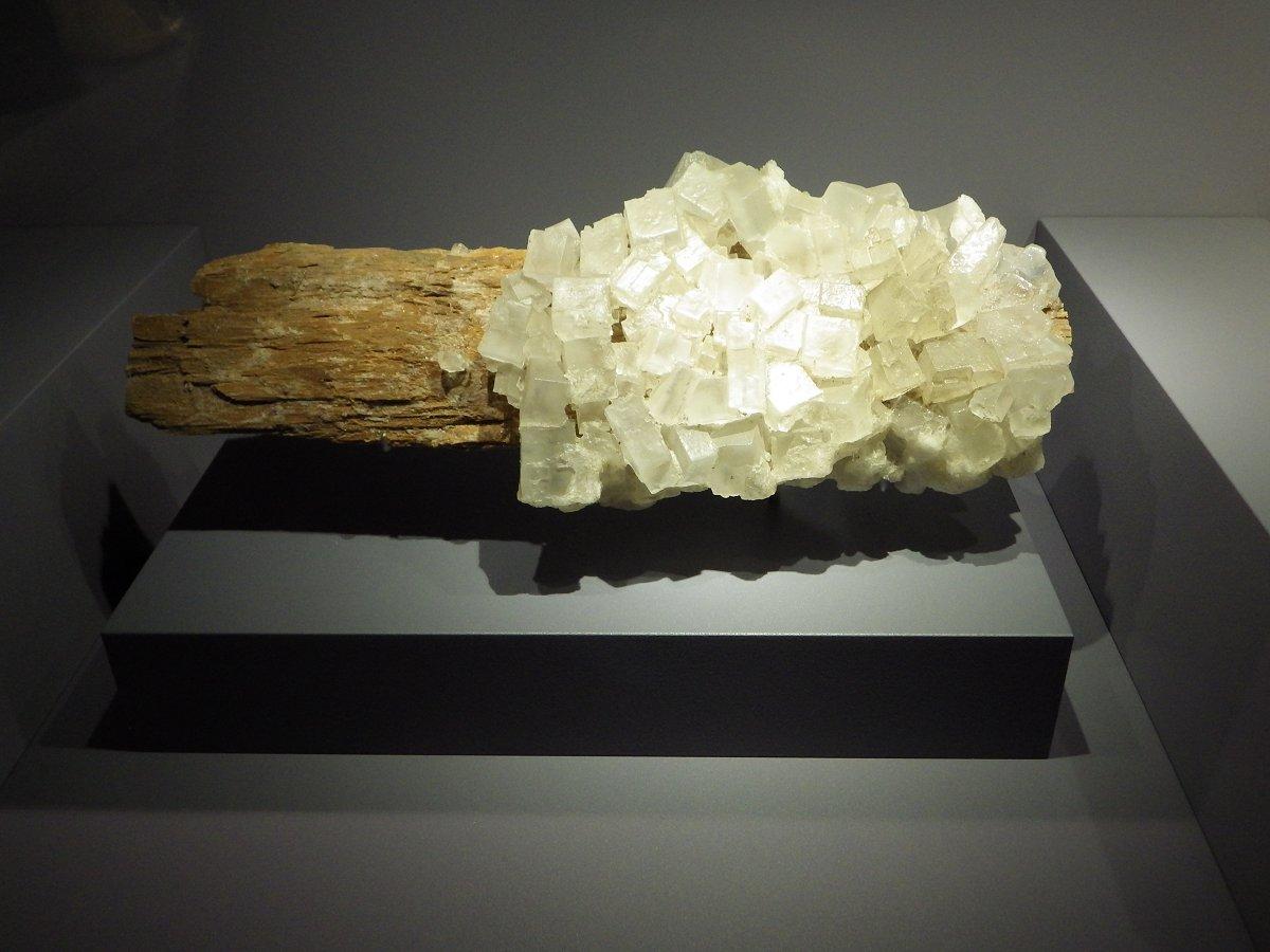 Photos exposition « Trésor de la Terre ». Sphoto34