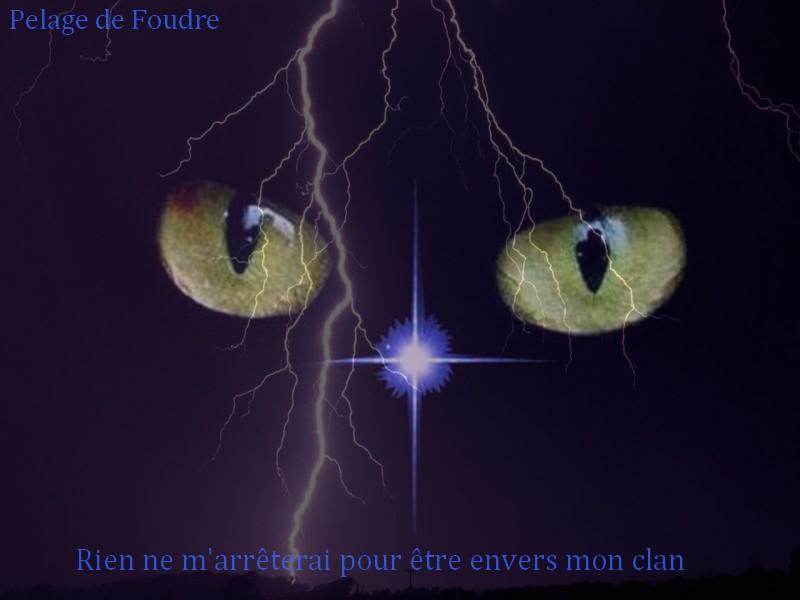 Pelage de Foudre - 16 L. - ♂ Pelage10