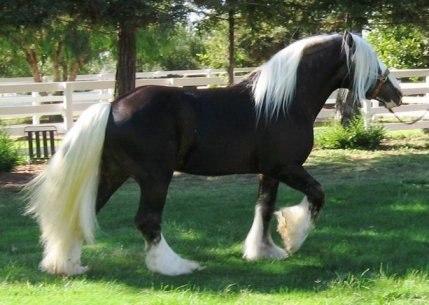 Масти лошадей (с фото) 10420110