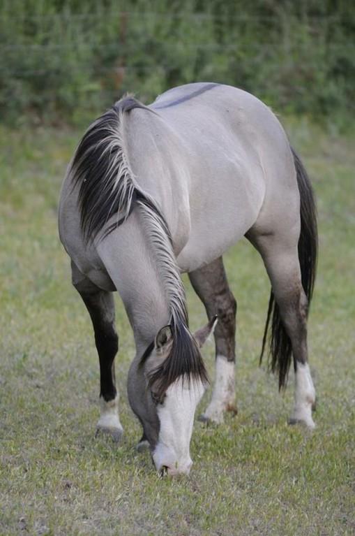 Масти лошадей (с фото) 10a14910