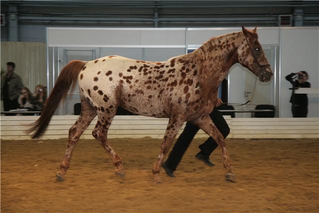 Масти лошадей (с фото) 13238610