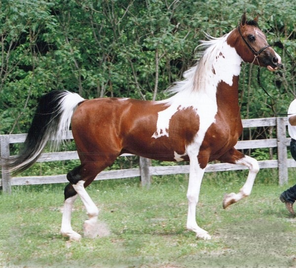 Масти лошадей (с фото) 22030410