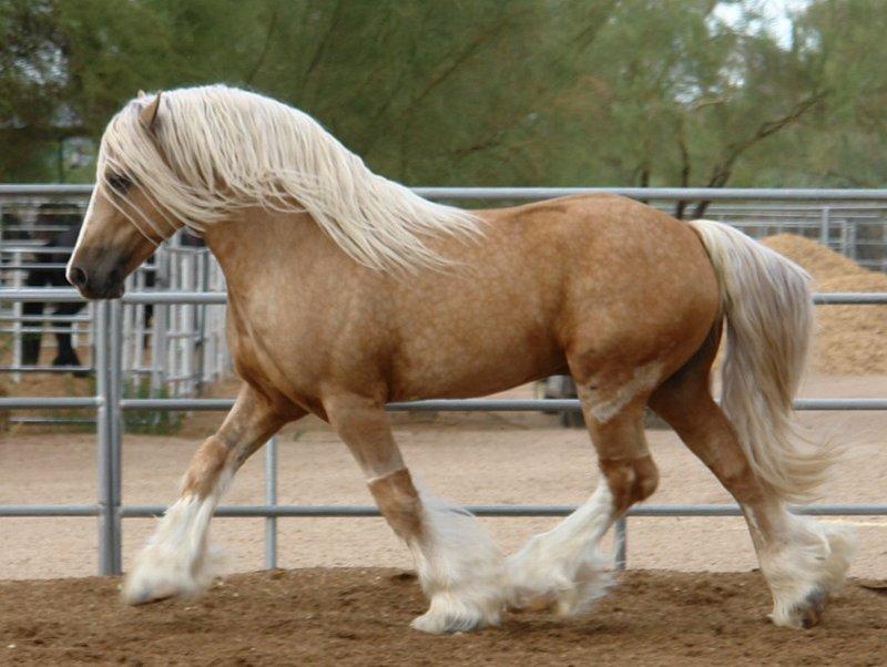 Масти лошадей (с фото) 29_los10