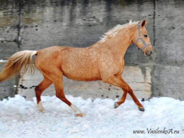Масти лошадей (с фото) 65524110