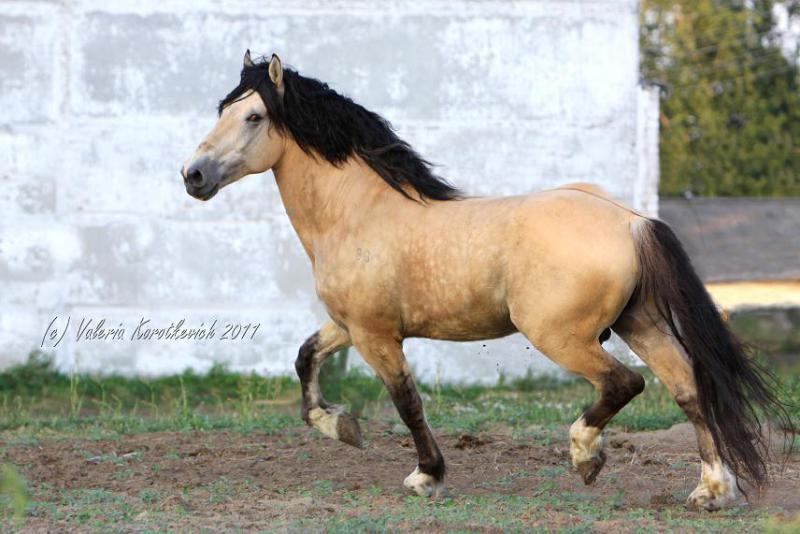 Масти лошадей (с фото) 852b6710