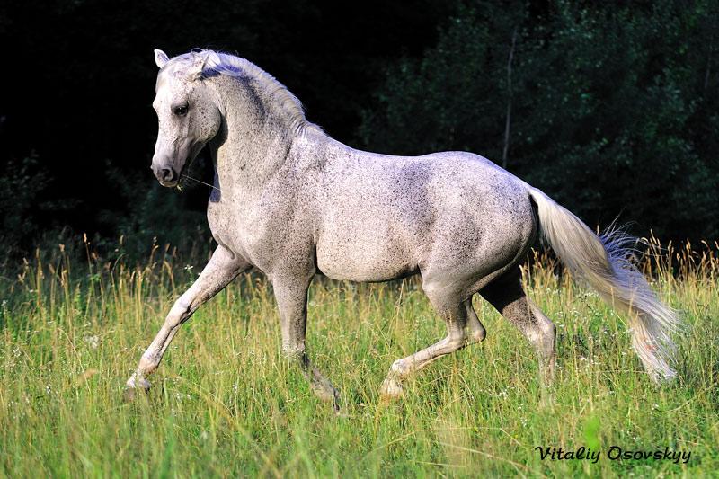 Масти лошадей (с фото) D5000610
