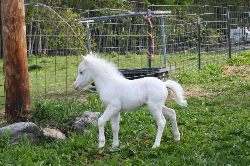 Масти лошадей (с фото) Foal-110