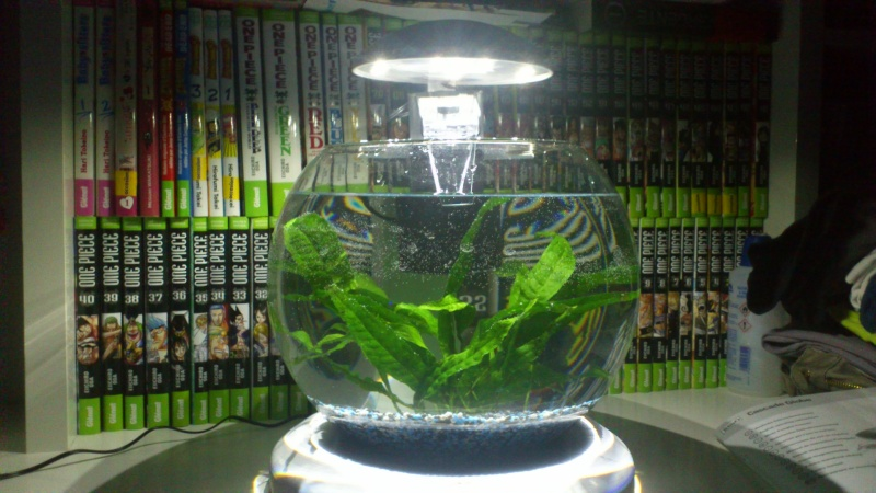 Mon petit aquarium Dsc_0610
