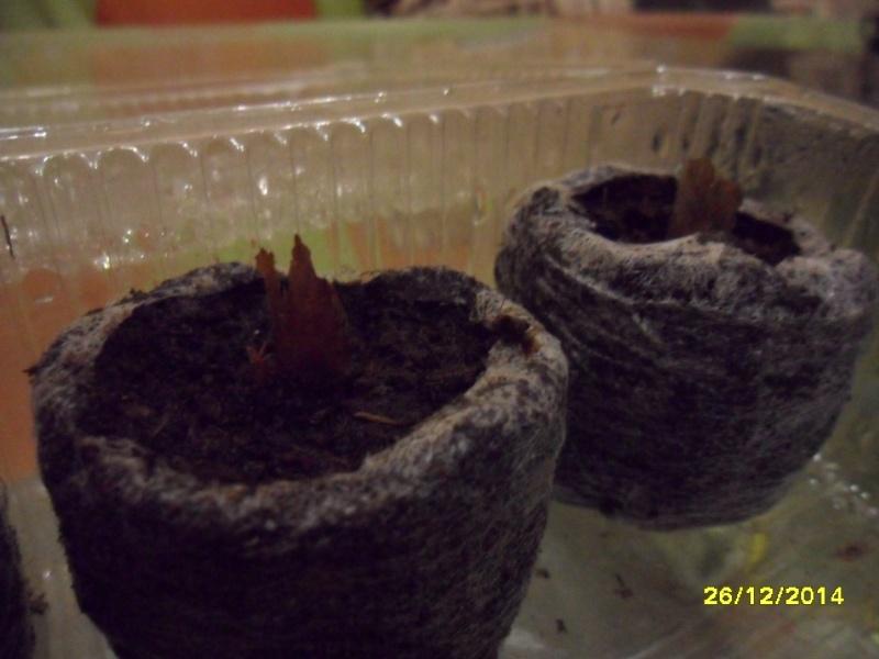 Посев семян Sam_0111
