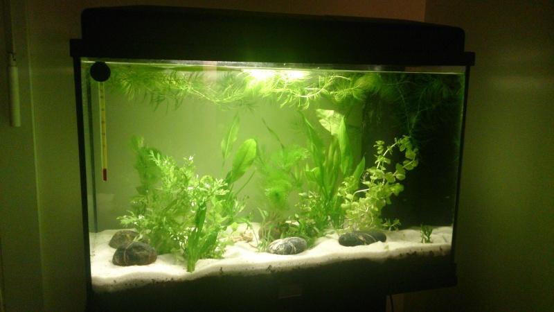 Nouvel aquarium Betta Dsc_0311