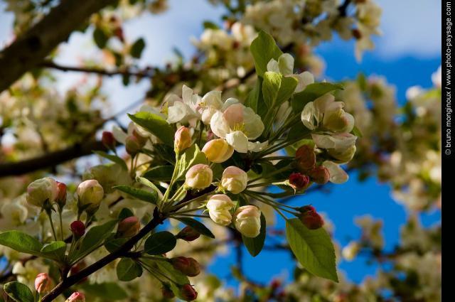 Dites-le avec des fleurs... Image_10