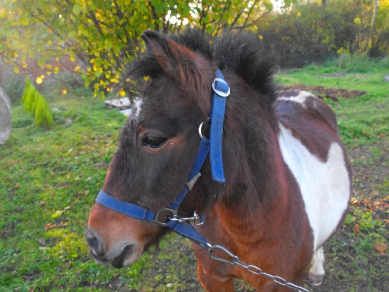 Mes deux Bébé poney <3 Dscf9110