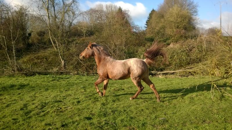 Mes deux Bébé poney <3 Wp_20110