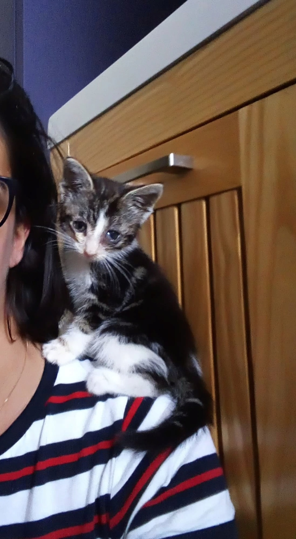 Comment s'occuper d'un chaton orphelin ? Receiv10