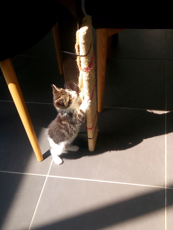 Comment s'occuper d'un chaton orphelin ? Receiv11
