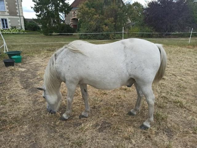 KIWI - ONC poney typé Shetland né en 1998 - adopté en juillet 2015 par Alexandra 211