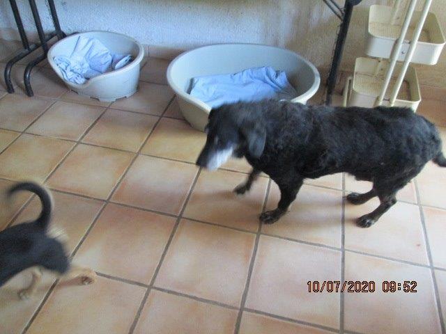 MASA, M-X, né 2004 env., taille moyenne, 20kg (Etela) En pension chez Cent Pas - Page 22 Img_5616