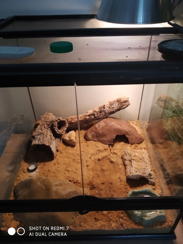Terrarium gecko léopard Img_2011