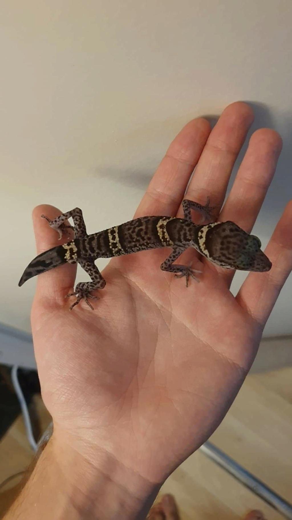 Question santé gecko chinois ?  Receiv10