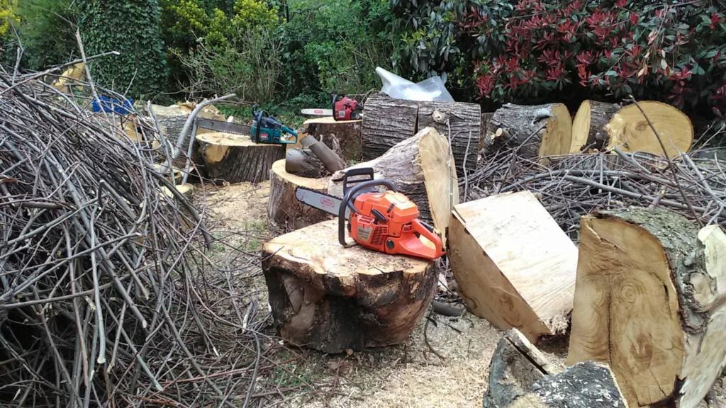 Taglio tronchi a terra di grosso diametro Ciocch10