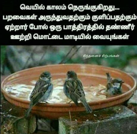வாட்ஸ் அப் பகிர்வு-  ரசித்தவை Birds_11