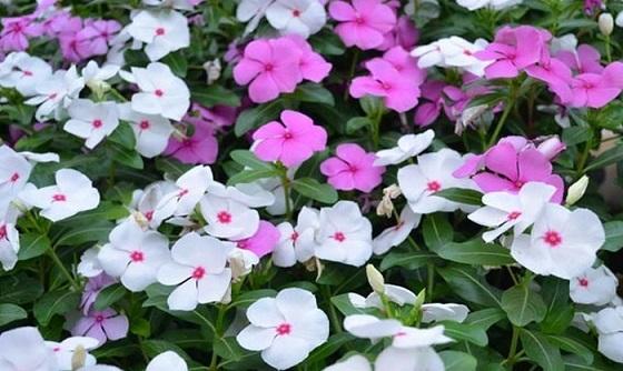 வாழ்க்கையின் தர்ம சங்கடமான நிலைமை Flower12