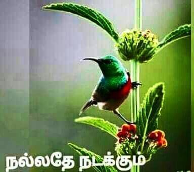 இணையத்தில் ரசித்தவை --1 Img-2012