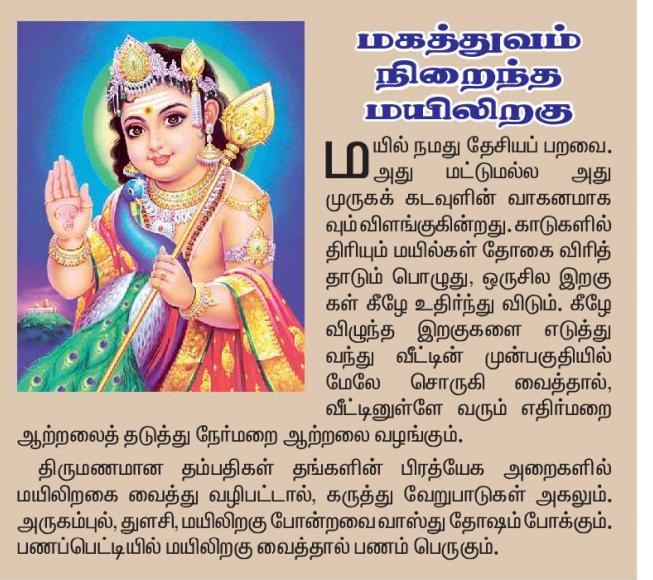 மகத்துவம் நிறைந்த மயிலிறகு Muruga14