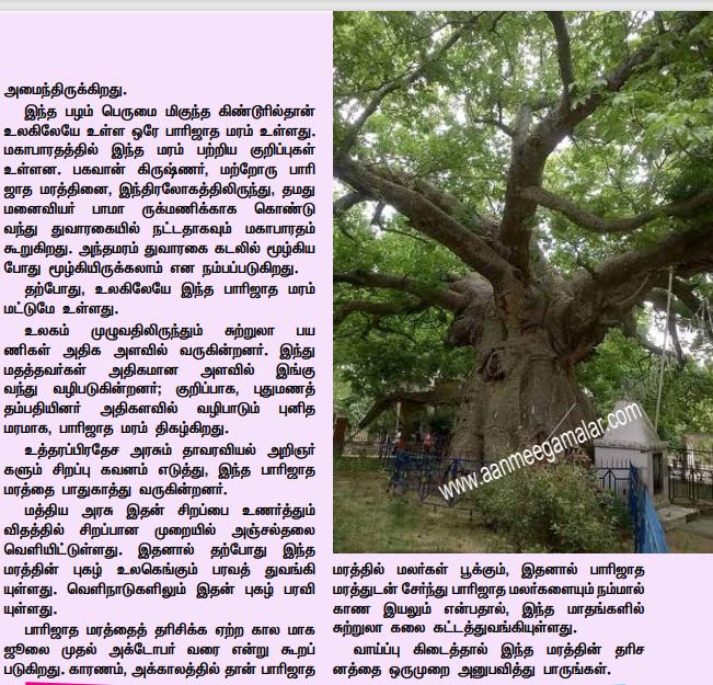 உலகத்தில் உள்ள ஒரே ஒரு பாரிஜாத மரம் Tree_110