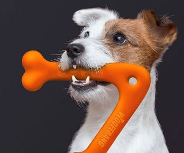 Frissbee Dog-bo10