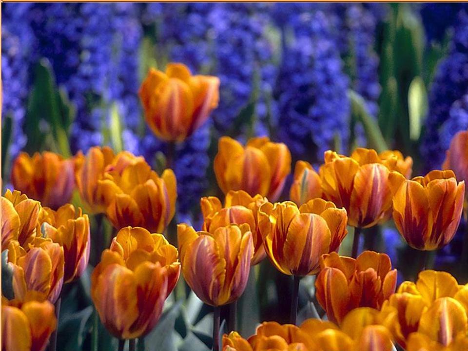 Los colores de la naturaleza. Diapos20