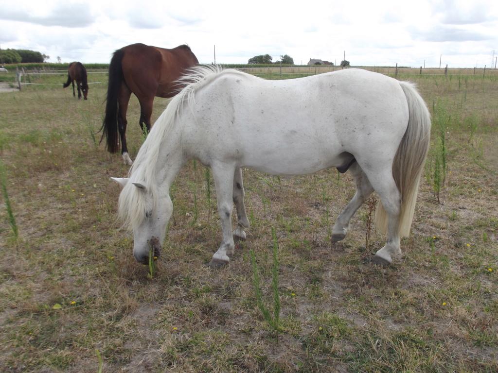 KIWI - ONC poney typé Shetland né en 1998 - adopté en juillet 2015 par Alexandra 1808ki26