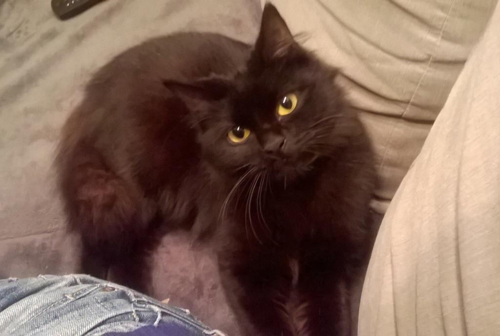 JOLANTA, Femelle noire, type européen née en février 2014 Wp_20135