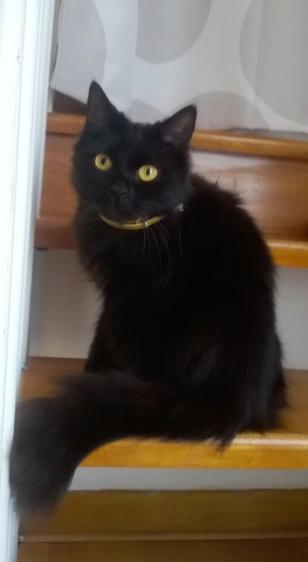 JOLANTA, Femelle noire, type européen née en février 2014 Wp_20136