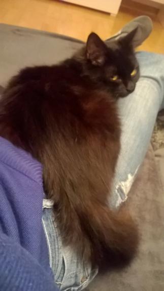JOLANTA, Femelle noire, type européen née en février 2014 Wp_20137