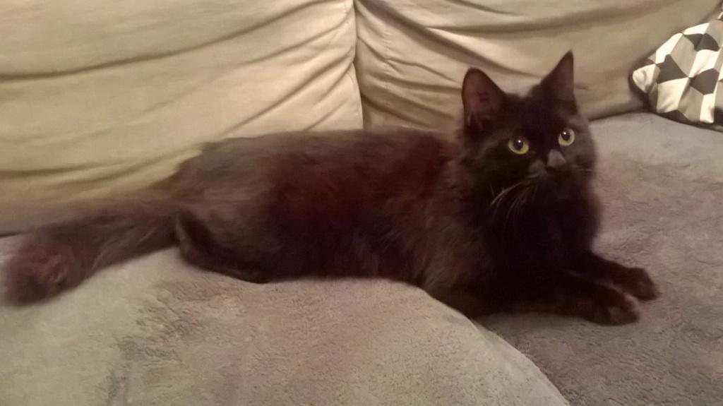 JOLANTA, Femelle noire, type européen née en février 2014 Wp_20139