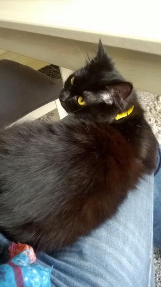 JOLANTA, Femelle noire, type européen née en février 2014 Wp_20141