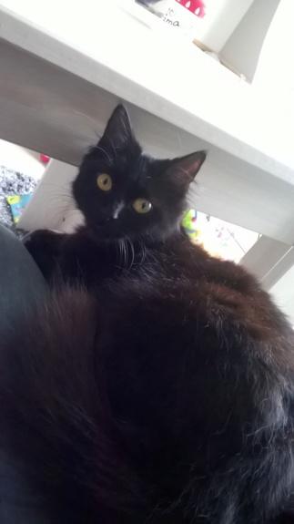 JOLANTA, Femelle noire, type européen née en février 2014 Wp_20143