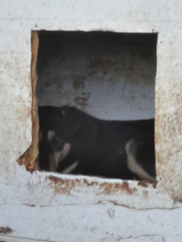 DUNKIN - !! + DE CINQ ANS DE BOX !! mâle croisé, de taille moyenne, timide, né env 2013 (PASCANI) - REMEMBER ME LAND - Page 6 61659710