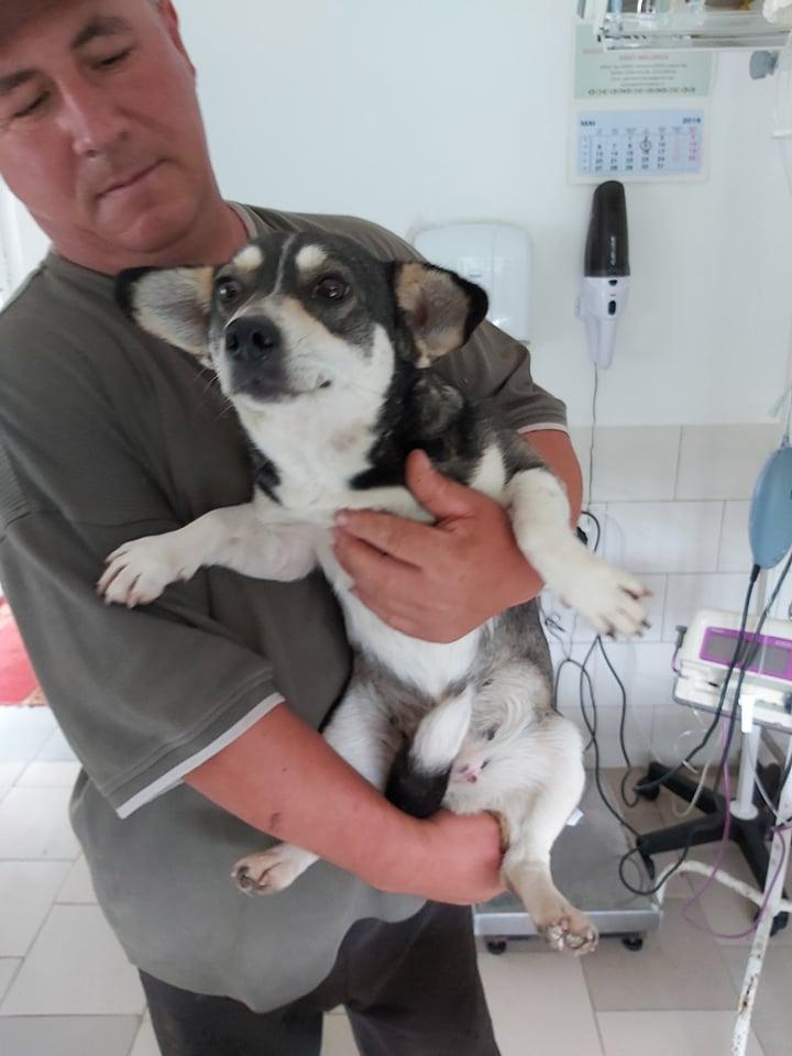 NINA (ex POMDAPI) - femelle de petite taille (12 kg) - née environ en mai 2015 - PASCANI - REMEMBER ME LAND - Adoptée par Gaelle (83) 62361510