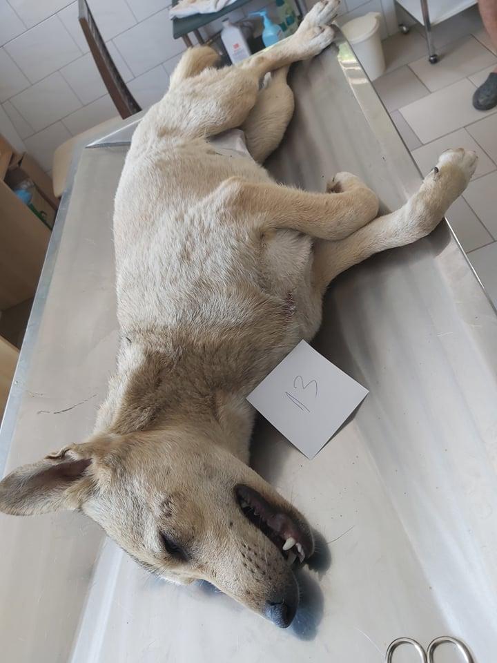 KENDRA - Femelle handicapée, croisée de taille moyenne, née en 2018 - PASCANI - REMEMBER ME LAND 64683910