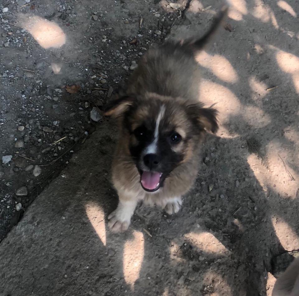 HANNI -  femelle de taille moyenne - née en avril 2019 (Carmina Bucarest) - adoptée par Sabine (16)  65113710