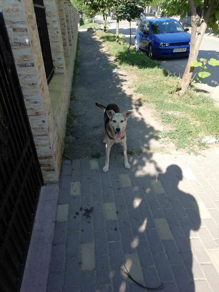 FJORD - Mâle croisé Berger- de taille moyenne- né en 2018 - en FA chez Marius en Roumanie - à la rue 65182610