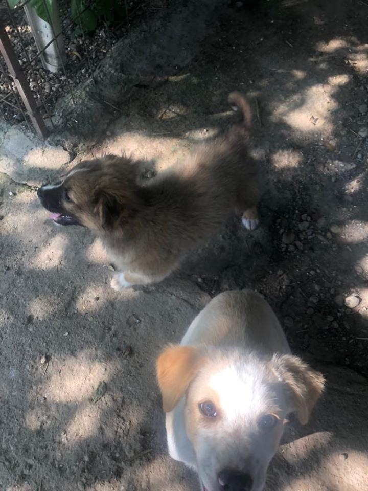 HANNI -  femelle de taille moyenne - née en avril 2019 (Carmina Bucarest) - adoptée par Sabine (16)  65306211