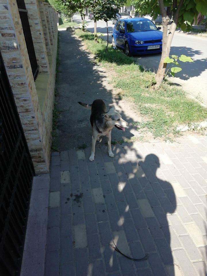FJORD - Mâle croisé Berger- de taille moyenne- né en 2018 - en FA chez Marius en Roumanie - à la rue 65518910