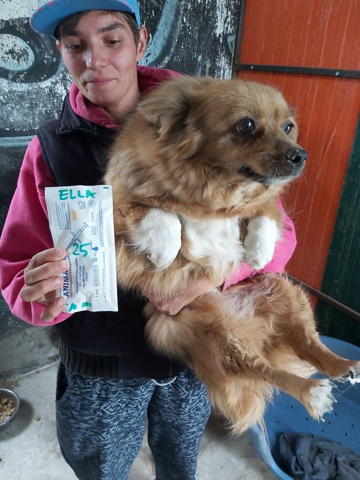 ELLA - Femelle croisée Pékinois de petite taille (10 kg) - née en juillet 2009 - adoptée par Nathalie (60)  66394410